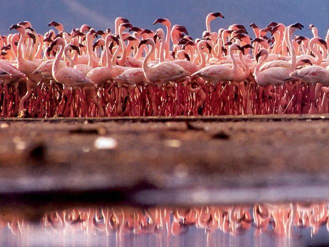 pink-flamingos2
